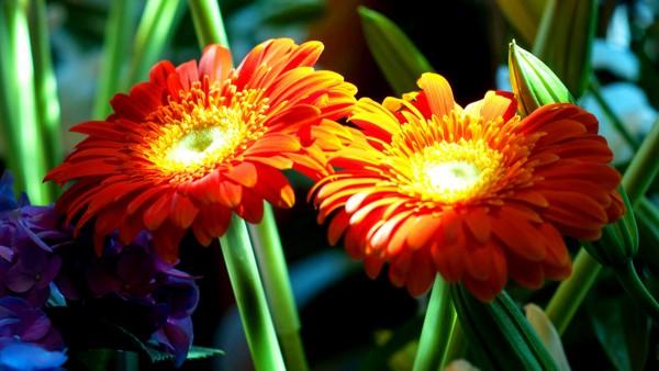 florist-8-milleridge